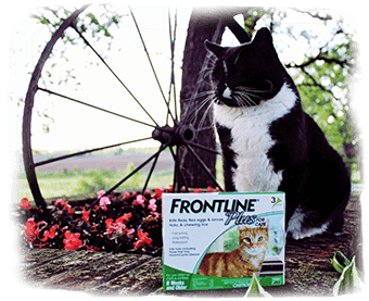 Black cat sitting next to a box of Frontline Plus