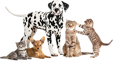 Grouping of pets - cats and dogs