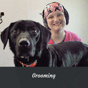 Black Lab & Pet Groomer | Grooming Services