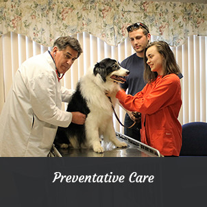 Dr. Dan Hartsell performing a physical exam | Preventative Pet Care