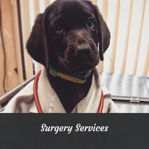 Black Lab puppy in doctor's coat | Surgery Services